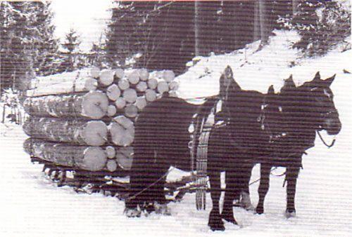 Erste Transportmittel - Zugschlitten